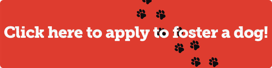 Click here to apply to foster a dog