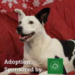 Adoption Sponsored By